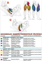 Жим ног – Жим ногами: платформы в тренажере лежа и сидя