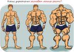 Все упражнения – Базовые упражнения на все группы мышц для набора мышечной массы